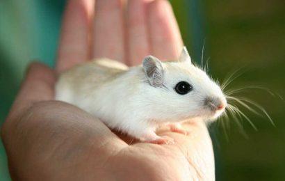 Gene mutation enhances cognitive flexibility in mice, study suggests