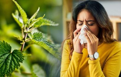 Best supplements for hay fever: A surprising herb could relieve your symptoms
