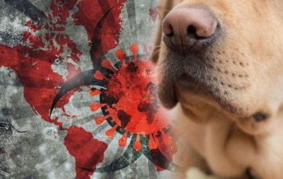 Coronavirus update: New trial using dogs to detect symptoms of COVID-19