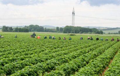 Coronavirus-mass infection in Bayern: 174 harvest helper Naturopathy naturopathy specialist portal infected