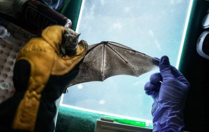Podcast: Wildlife surveillance may help identify the next pandemic