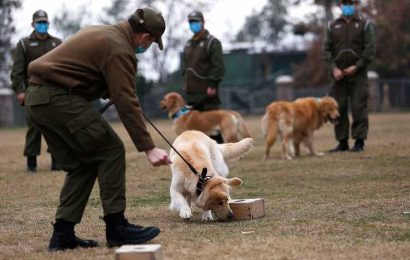 Dogs Are Able to Detect Presence of Coronavirus by Sniffing Human Saliva, New Study Finds