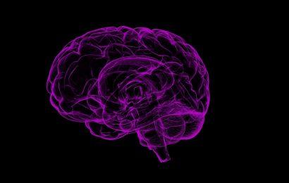 How a single protein in non-neuronal cells controls brain development