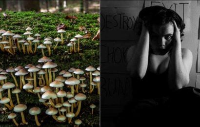Mental health: Study reveals magic mushroom drug may treat depression