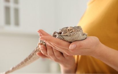 Beware pet 'bearded dragons': CDC says they could carry salmonella