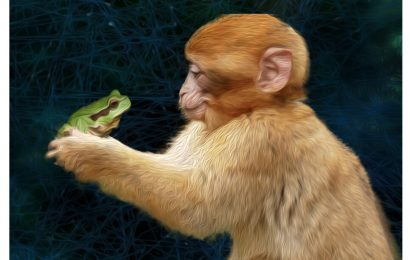 Spinal modules in macaques can independently control forelimb force direction and magnitude