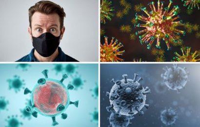 Coronavirus explainer: How the crown-wearing viruses infected the human race