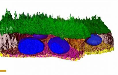 Reconstruction of eye tissue gives new insight into outer retina