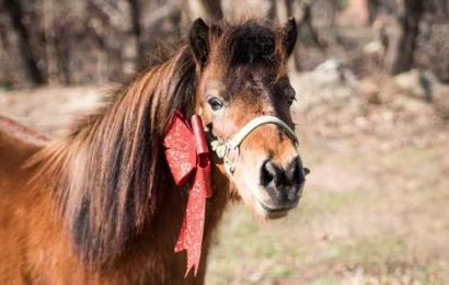 200 Horses Helped at the ASPCA Regional Support Center