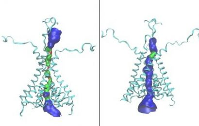 Discovery of a new form of a brain protein has clinical implications