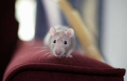 Early training delays symptom onset in mouse model of Rett syndrome