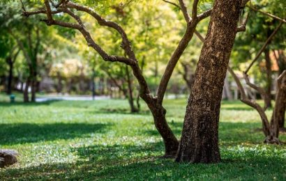 63% of people reported decreased time spent visiting green spaces during lockdown