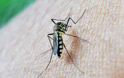 Custom proteins for malaria diagnostics