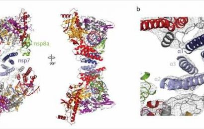 Research finds polymerase of SARS-CoV-2 can adopt an alternative structure