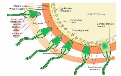 Endocrine disruptors threatens semen quality