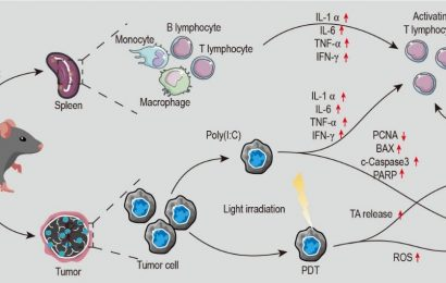 Highly efficient photodynamic-immunotherapy by combining AIEgen with Poly(I:C)