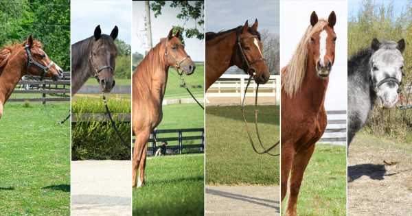 Six Horse Breeds You Should Know