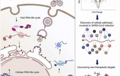 Protein-RNA interactions in SARS-CoV-2-infected cells reveal key regulators of infection