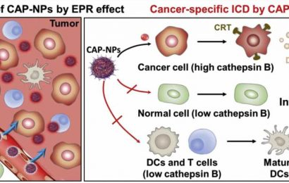 New anti-cancer immunotherapy drug: Fewer side effects, more therapeutic