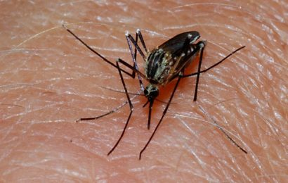China earns a malaria-free certification from WHO